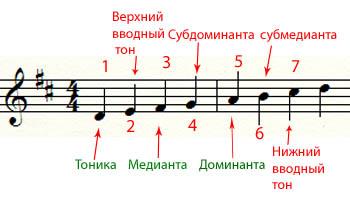 Названия ступеней гаммы в теории музыки